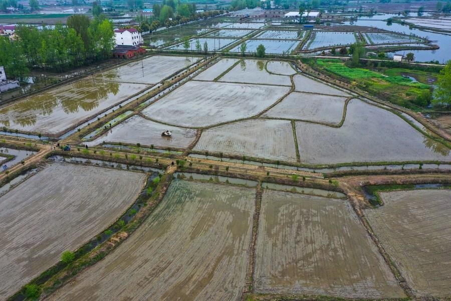 เกษตร 5G : จีนใช้ 'ระบบชลประทานอัจฉริยะ' ช่วยประหยัดน้ำ-เพิ่มพูนผลผลิต